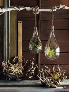 most beautiful air plants display ideas hanging terrarium driftwood