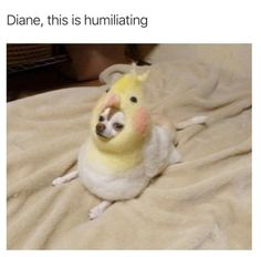 This poor lil' guy: Just 33 Hilarious Dog Memes Animal Jokes, Funny Animal Memes, Dog Memes, Funny Animal Pictures, Funny Dogs, Cute Little Animals, Cute Funny Animals, Funny Cute, Cute Memes