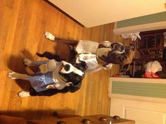 Halloween Boxers (Boone and Dixie)