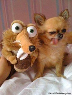 This dog's imitation of Scrat!