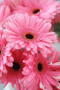 ✯ Pink Gerbera Daisies https://www.facebook.com/FashionFieldsForever