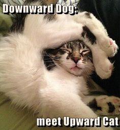Downward Dog: meet Upward Cat http://cheezburger.com/9064711424/downward-dog-meet-upward-cat