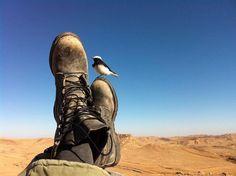 Soldier resting in the desert
