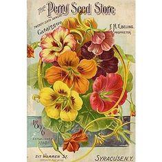 vintage seed packets printable | Printables / 1896 Vintage seed packet printable - Polyvore