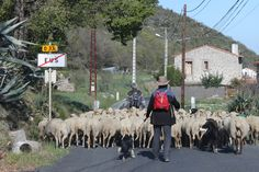 Eus - a sherpherd with his sheep Beaux Villages, Sheep, Goats, France, Animals, Animales, Animaux, Animal, Animais