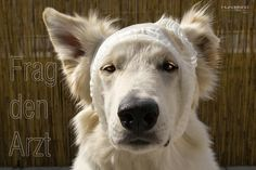 Der Hundeblog veranstaltet regelmäßig Trickwettebewerbe, DIYs, Rezepte und befragt einen Tierarzt nach hündischen Anliegen