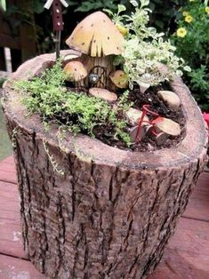 Fairy garden in a hollow stump. This could be an alternative use for the woodpecker log. I like that it's closer to eye level.