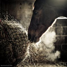 I can feel the dampness...Equine Love