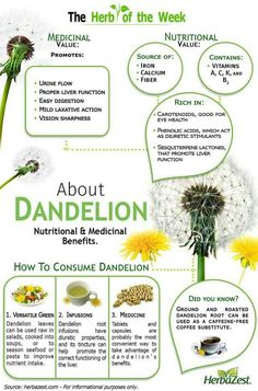 Dandelion Infographic: Dandelion<br> Infographic: Dandelion contains all you need to know about dandelion! This herb provides considerable amounts of vitamin A, calcium, and potassium. Healing Herbs, Medicinal Plants, Natural Healing, Natural Herbs, Natural Health Remedies, Herbal Remedies, Home Remedies, Iron Vitamin, Vitamin A