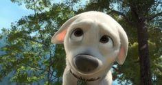 Quiz: Which Disney Dog Are You? | Quiz | Oh My Disney