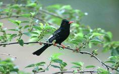 Black Bird On Branch