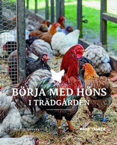 Skaffa höns i trädgården – det behöver du veta | Land Chicken Race, Chicken Coops, Hen House, Dream Garden, Garden Plants, Rooster, Animals, Country Living, Future