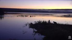Beautiful morning dawning on the river/lake near Brooks Falls 9-10-2016