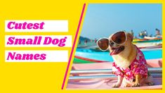 Small Dog Names, Cute Names For Dogs, Best Dog Names, Cute Small Dogs, Puppy Names, Pet Names, Best Dogs, Cute Dogs, Police Dog Names