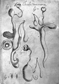 Category:Homunculus - Wikimedia Commons