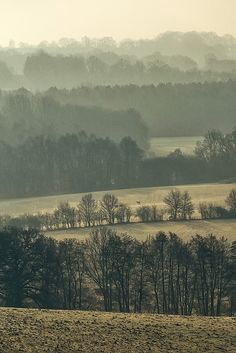 A foggy British morning, Sussex