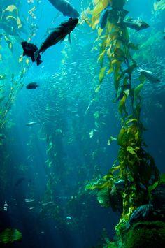 Monterey Bay Aquarium | Photo by Daniel Pivnick