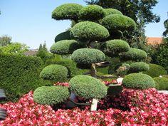 BONSAI PARK tree shrub plant the most beautiful Japanese Garden