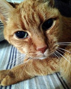"""This little buddy has been alive for 22 years. """"(He's) been with me since the day I was born, my one true friend,"""" said Ryan Temple via reddit. He has been with his human for 21 years. He is 22 years old.    reddit  """"I am 21 and my parents adopted him when they found out they were pregnant with me…...."""