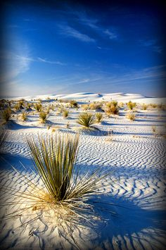 White Sands NM - so beautiful you'd never guess the world's first atomic bomb was tested just a few miles away.  Played in the sand so much I have a constant glow. :)