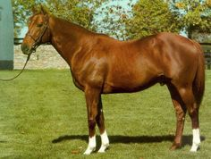 Blushing Groom(1974) Red God- Runaway Bride By Wild Risk. 4x5x5 To Blandford, 5x5 To Phalaris. 10 Starts 7 Wins 1 Second 2 Thirds. Won 1976  Prix Morny(G1), Fr. 2000 Guineas(G1) In 1977. Champion 2 YO In Fr. Champion Miler In Fr. In 1977. Leading Sire In Eng. And Ire. In 1989. Leading Broodmare Sire In Eng. And Ire. In 1988,1995. Sire Of 92 SW. Died In 1992 At 18 YO.