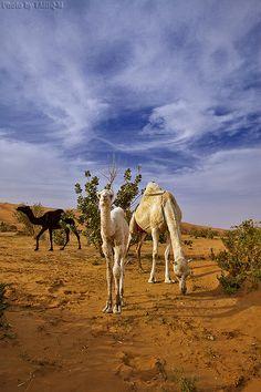 Sahara. Saudi Arabia