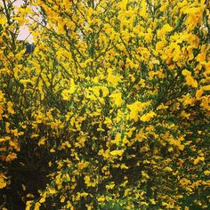 #flowers#garden#park#yellow#spring#colourful