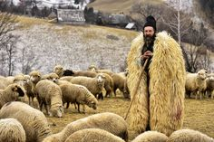 HERDING THE FLOCKA shepherd poses with his flock outside of Bran village in Transylvania, in central Romania. Wildlife and agriculture thrive in the region, which is bordered by the Carpathian Mountains to the east and south. PHOTOGRAPH BY EDUARD GUTESCU, NATIONAL GEOGRAPHIC YOUR SHOT