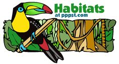 Habitats/Ecosystems - FREE presentations in PowerPoint format, interactive activities, lessons for (Animals in Their Homes) Interactive Activities, Science Resources, Science Lessons, Science Activities, Life Science, Science Ideas, Kindergarten Science, Science Classroom, Teaching Science