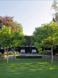 Schrittweise umgebauter Wohngarten. Vier kleinkronige Trompetenbäume laden an heißen Sommertagen unter ihr Blätterdach ein. Geschnittene Hainbuchen und die immergrüne Wand der Eibenhecke verleihen der architektonischen Komposition eine elegante private Atmosphäre.
