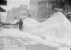 These are snowbanks! Rochester (NY) treetscape after the blizzard of 1900.