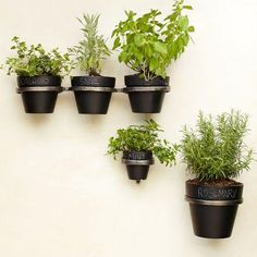 Plants and plants pots for urban patio gardens and vertical planting