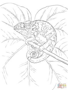 common chameleon coloring page from chameleon category select from 25266 printable crafts of cartoons nature animals bible and many more - Chameleon Coloring Pages Print