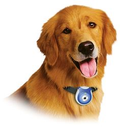 Find Out What Your Dog Is Up To With Pet Camera ... #pets #animals ... PetsLady.com