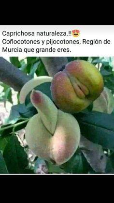 Best Memes, Ronaldo, Peach, Humor, Videos, Funny Emoticons, Jokes, Naturaleza, Green