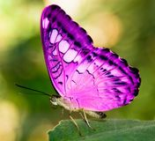 Pink Butterfly On Leaf - Download From Over 46 Million High Quality Stock Photos, Images, Vectors. Sign up for FREE today. Image: 2754088