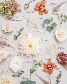Wedding bouquet preservation by The Heirloom Bouquet. A modern bouquet preservation company. Some of our pieces from Small Wedding Bouquets, Wedding Flowers, Bridal Bouquets, Dried Flower Bouquet, Dried Flowers, Flower Bouquets, Flower Names, Flower Aesthetic, Arte Floral