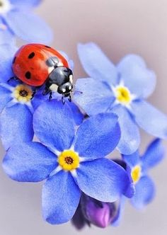 Whenever I see or think of ladybugs I think of Michelle Simonovich.