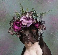 pitbull & 🌷🌹🌸🌺   #dog #dogs #dogsperts #pet #love #doglover #cute #puppies #pup #pups #pitbulllove #pitbull #pitbulls #flower #flowers