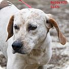 Adopt A Pet :: Bobby - Columbus County ACC Whiteville, NC