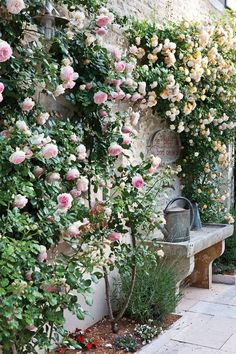 Flower Garden Projects That You Can Do It Yourself - Dream garden - Blumen & Pflanzen Wall Climbing Plants, Climbing Roses, New Dawn Climbing Rose, Small Cottage Garden Ideas, Garden Cottage, Small Garden Planting Ideas, French Garden Ideas, Garden Living, Small Courtyard Gardens