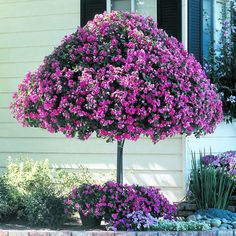 Impatiens tree made of a steel frame and baskets of impatiens.