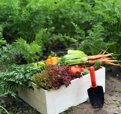 What to Plant in Your Survival Garden - Heirloom Vegetables, Non-Hybrid Seeds