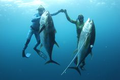 Catching your own food: Spearfishing