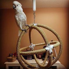 DIY Parrot Toys #parrotcagediy #parrotcageideas