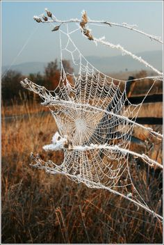 "Spider web (outlined with strands of ""cotton""?)"