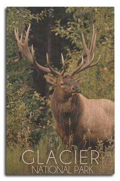 Elk Images, Elk Pictures, Whitetail Deer Pictures, Elk Hunting, Pheasant Hunting, Turkey Hunting, Archery Hunting, Big Deer, Pagosa Springs