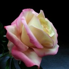 {I would swear this a real 'Double Delight' Rose! It was created by La Lavande Sugar Florist}