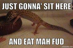 "Leopard Gecko meme. Toots ""sits"" when he eats, lol."