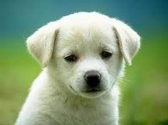 หมาน่ารัก - ค้นหาด้วย Google